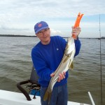 snook 5