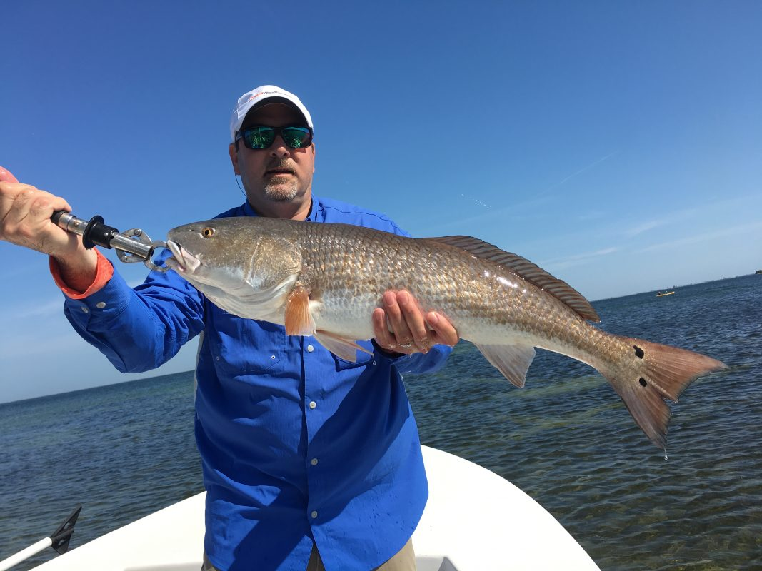 Fishing report march 26 2017 southernaire fishing charters for Anna maria fishing report